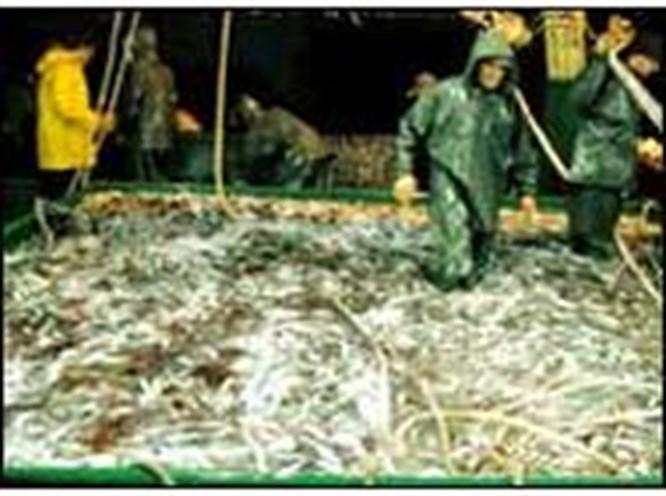 Bu yıl balık bol olacak!